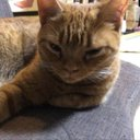 ADHDcatcatのアイコン(2020年06月29日頃)