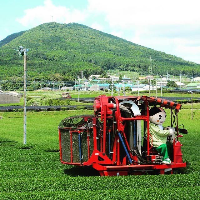茶畑(南九州市)