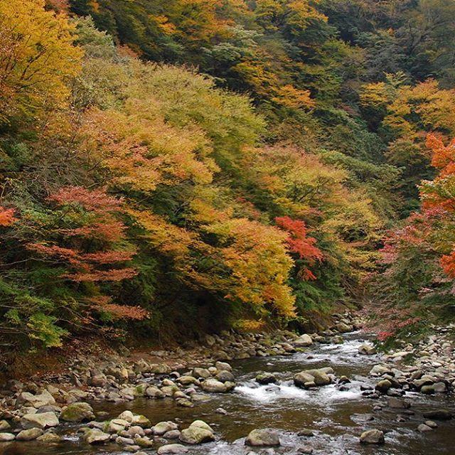 早川渓谷(箱根町)