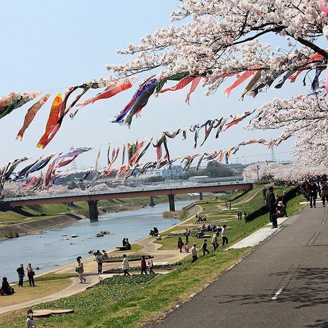 釈迦堂川(鯉のぼり川渡し)