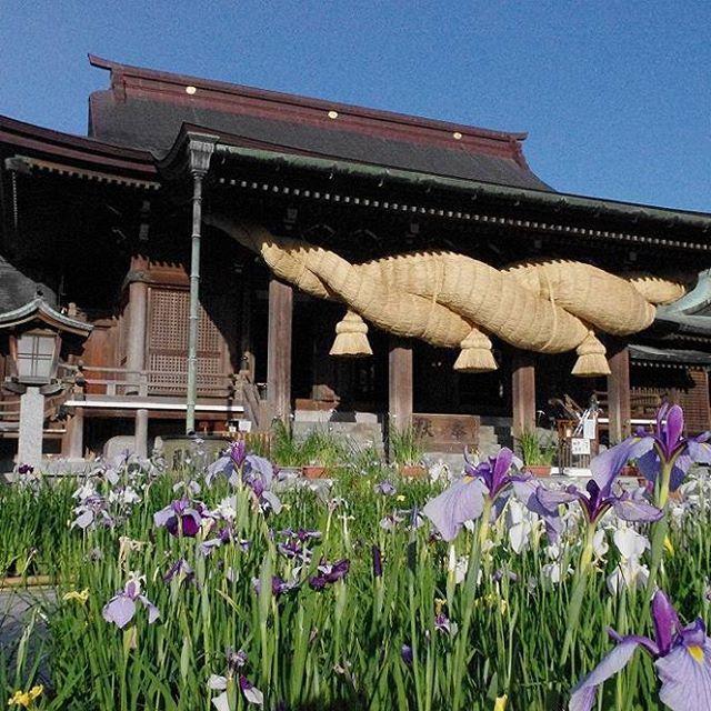宮地嶽神社(菖蒲まつり)