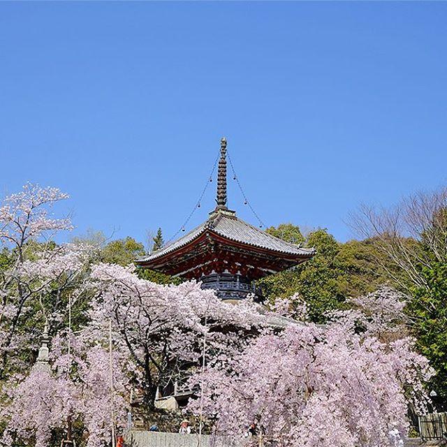 第8番札所熊谷寺