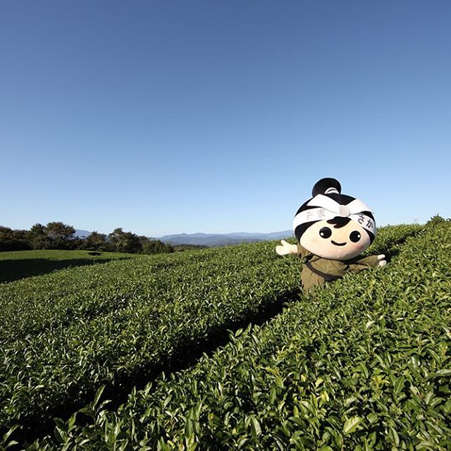 海田の茶畑(美作市マスコットキャラクターむさっち)