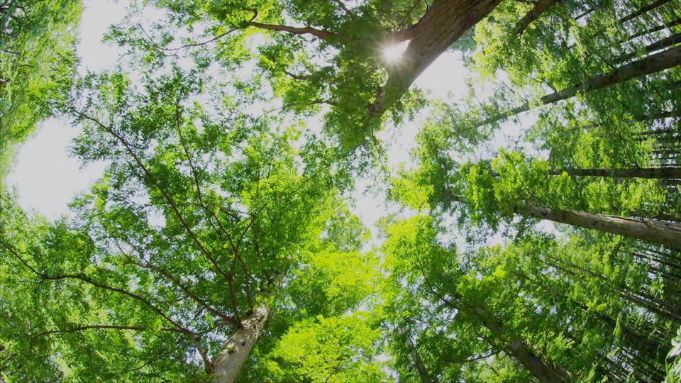 水元公園_K515_C019-Thumbnails.jpg