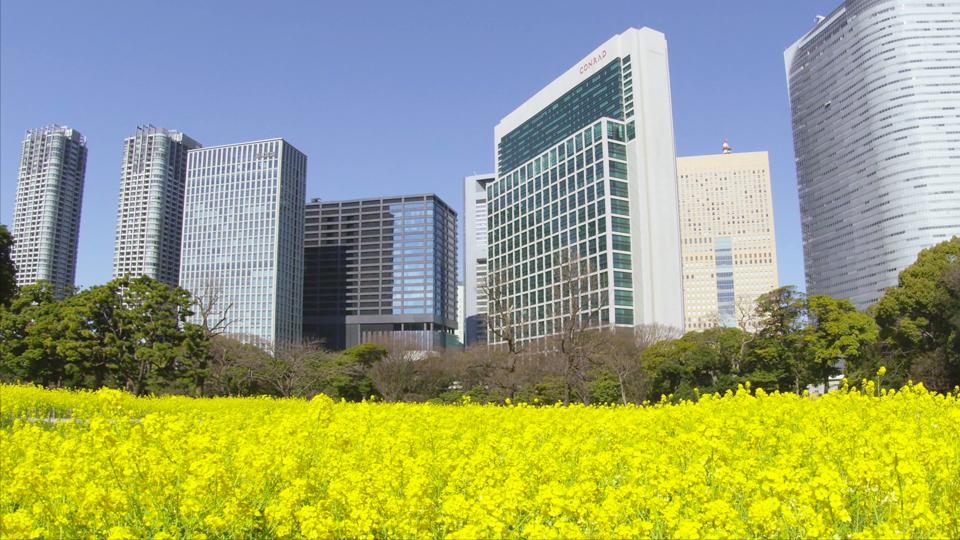 K412_C002_浜離宮菜の花-Thumbnails.jpg