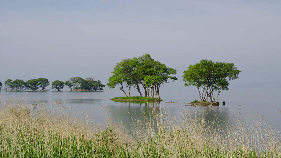 L190_C013_琵琶湖-Thumbnails.jpg