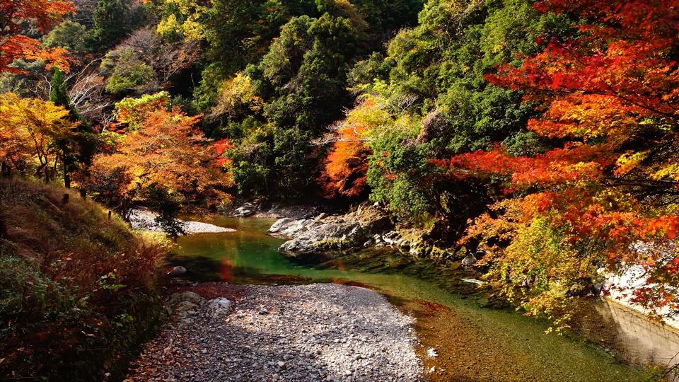 Taichichujo_201711_京都清滝川2-Thumbnails.jpg