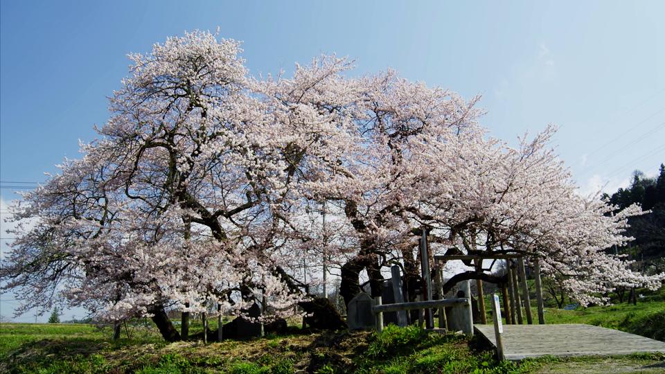 sato_E081_C001_石部桜-Thumbnails.jpg