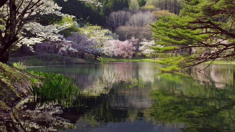 sato_fukushima_K458_C017_hanndanuma-Thumbnails.jpg