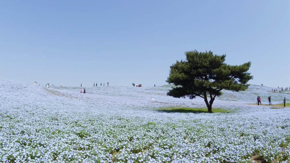 sato_tokyo_K449_C021_hitachikaihin-Thumbnails.jpg