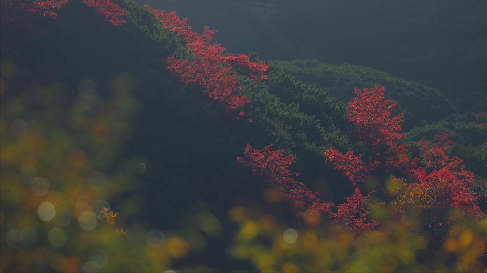 yamazaki_021十勝岳温泉紅葉2-Thumbnails.jpg
