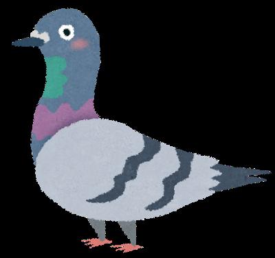 鳩の豆鉄砲