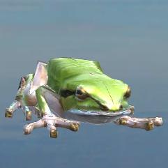 Frog_Crops