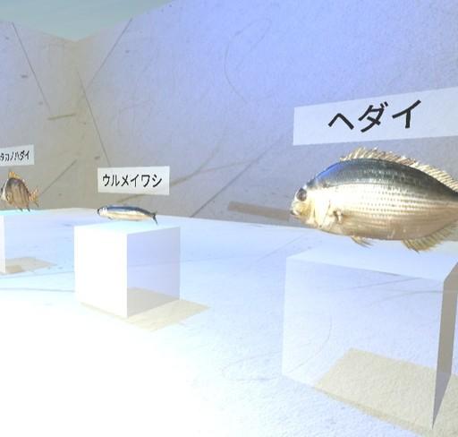 魚10種類の展示