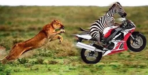 虎からにげろ!!