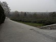 ホステル前の景色