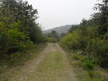 山の中へ続く道