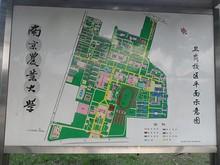 農業大学の案内図