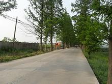中州を南北に貫く道路