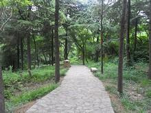 歩道を登って陽山碑材へ