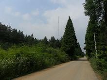 林とタワー