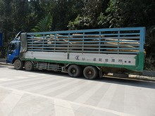 谷川運輸倉庫(株)専属と書いてあるトラック